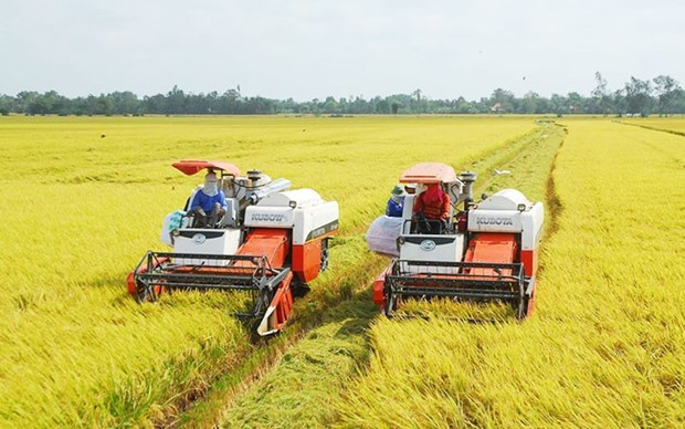 Exportation de riz du delta du Mekong en 2020 hinh anh 1