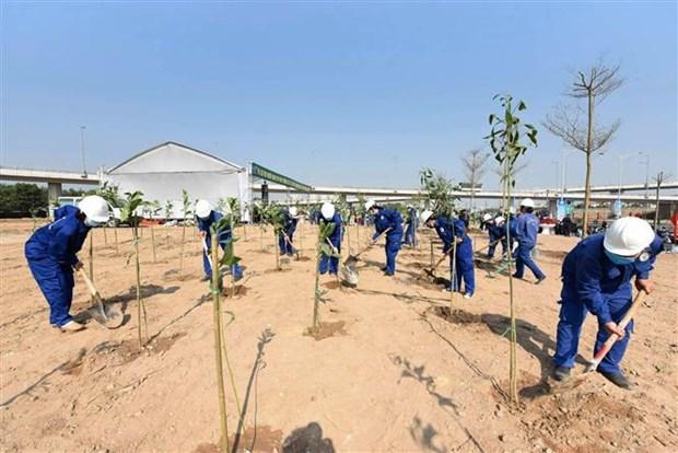 Edification d'une base de donnees sur les arbres a l'echelle nationale hinh anh 1