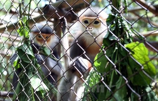 La conservation de la biodiversite necessite la participation de toute la societe hinh anh 1