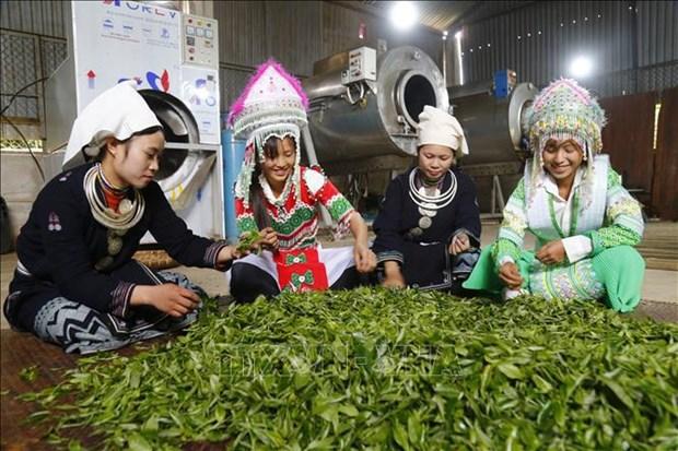 Efforts continus pour ameliorer les conditions de vie des ethnies minoritaires hinh anh 1