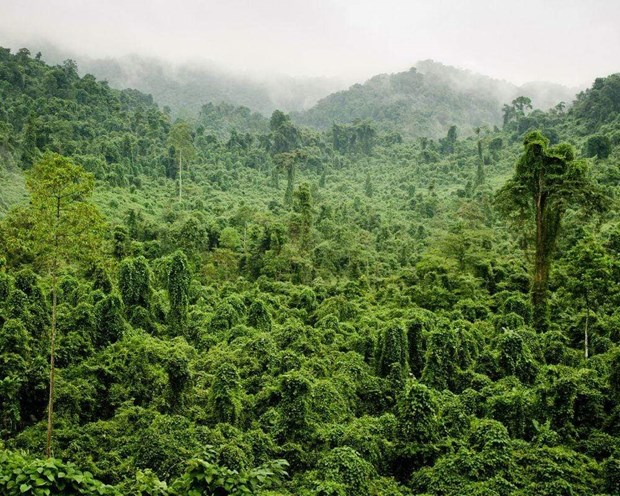 Pres de 270.000 hectares de forets au Vietnam ont obtenu des certificats internationaux hinh anh 1