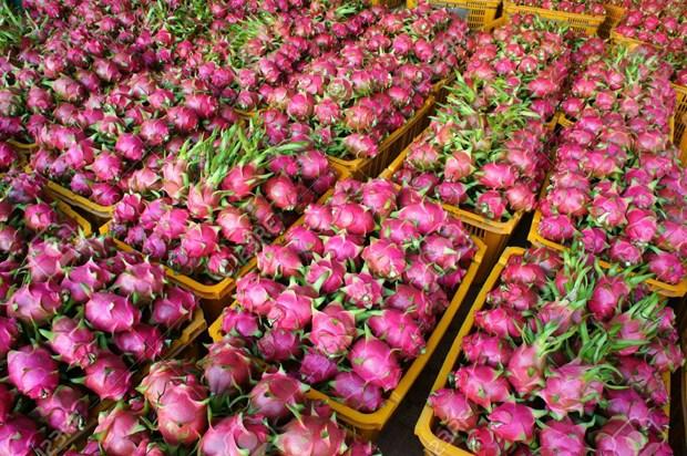 Long An : 50 tonnes de fruits du dragon exportees quotidiennement par voie maritime hinh anh 1
