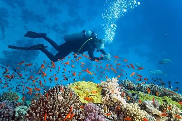 Forbes: L'ile de la Baleine (Centre) figure parmi les 10 meilleures destinations pour la plongee hinh anh 1