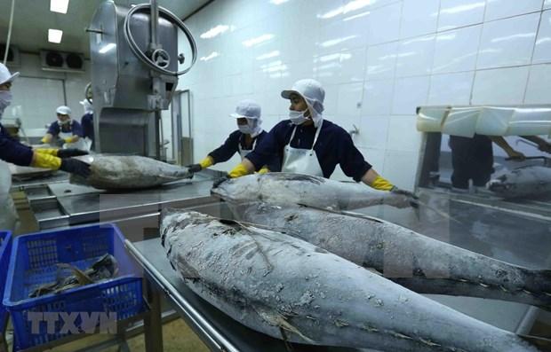 Vietnam-Israel : Les echanges commerciaux depassent 236 millions de dollars en deux mois hinh anh 1