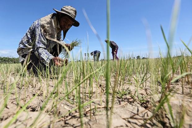 La Thailande fait face a une grave secheresse et a une hausse du chomage au milieu du COVID-19 hinh anh 1