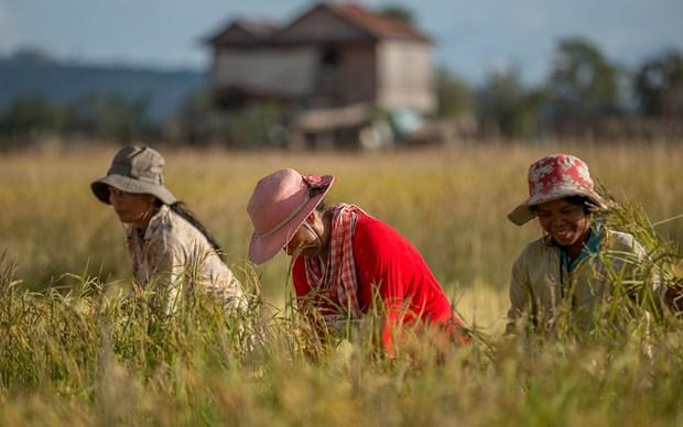 Le Cambodge soutient le secteur agricole et prepare l'etablissement d'une economie numerique hinh anh 1