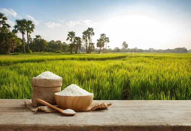 Les exportations de riz du Cambodge devraient atteindre 800.000 tonnes en 2020 hinh anh 1