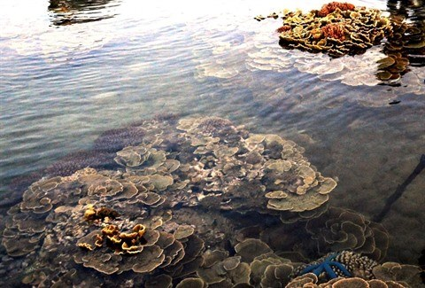 Ganh Yen : l'aquarium terrestre hinh anh 1