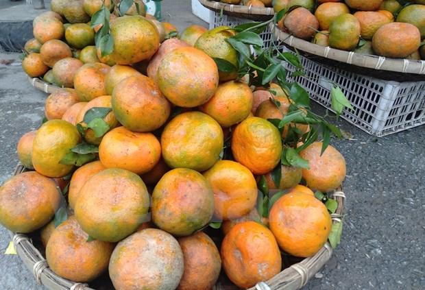 L'orange «Bu», un produit agricole cle du district de Huong Son (Ha Tinh) hinh anh 2