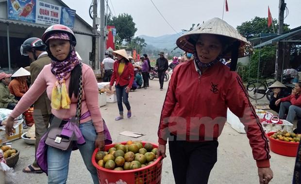 L'orange «Bu», un produit agricole cle du district de Huong Son (Ha Tinh) hinh anh 3