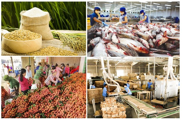 Exportations de produits agricoles, sylvicoles et aquatiques en hausse de 1,6% en neuf mois hinh anh 1