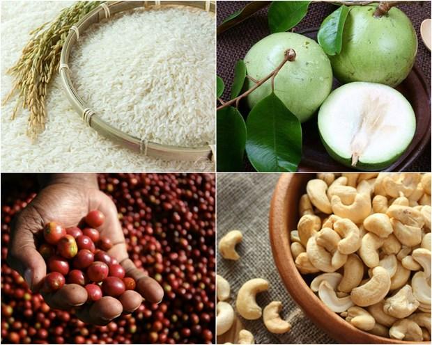 EVFTA : Affirmer la qualite des produits agricoles vietnamiens hinh anh 1