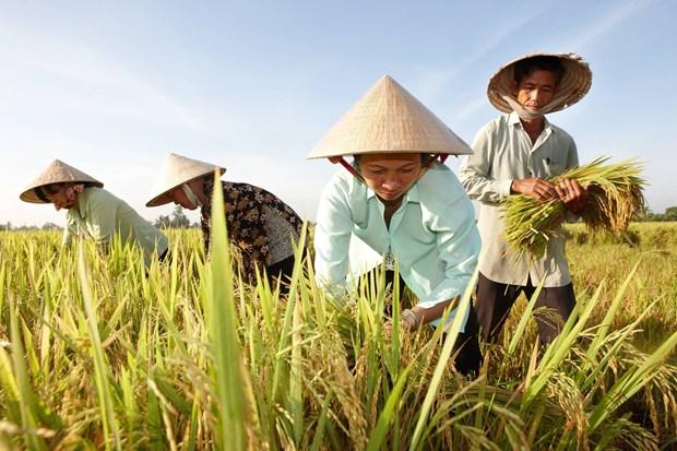 Opportunites de renforcer les exportations nationales de riz vers l'Australie hinh anh 1