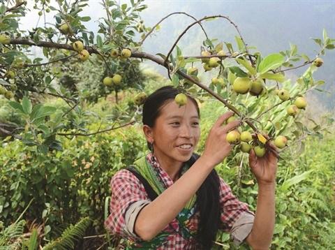 Sortir de la pauvrete grace a la culture du tao meo hinh anh 1