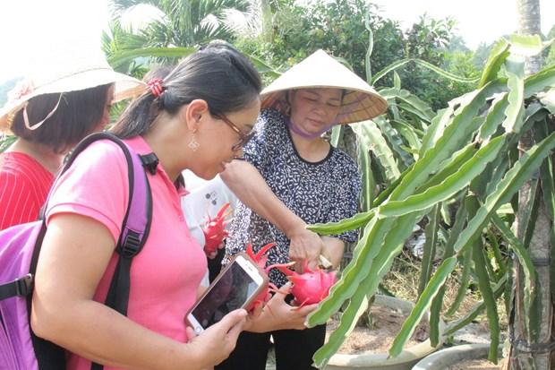 Binh Thuan promeut le developpement de produits touristiques associes a une agriculture durable hinh anh 2