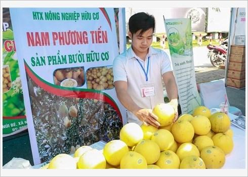 Le pamplemousse de Dien assure la prosperite de Nam Phuong Tien hinh anh 5