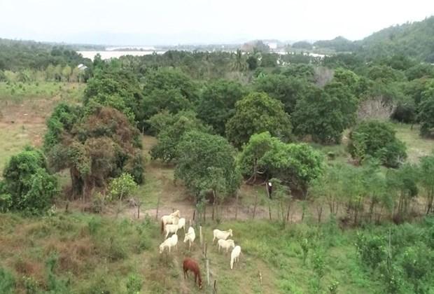Une ferme de chevaux blancs sur les hauts plateaux du Centre hinh anh 2