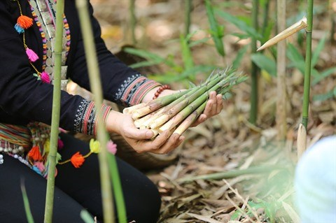 Les pousses de bambou contribuent au refus de la pauvrete hinh anh 1