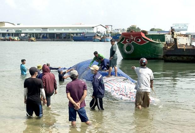 Binh Thuan : Enterrement d'une baleine de plus de 4 tonnes hinh anh 2