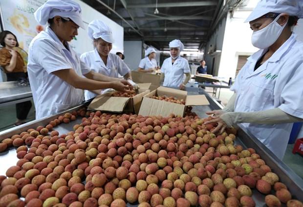 Exploiter pleinement le potentiel d'exportation des produits agricoles vietnamiens vers l'Australie hinh anh 1