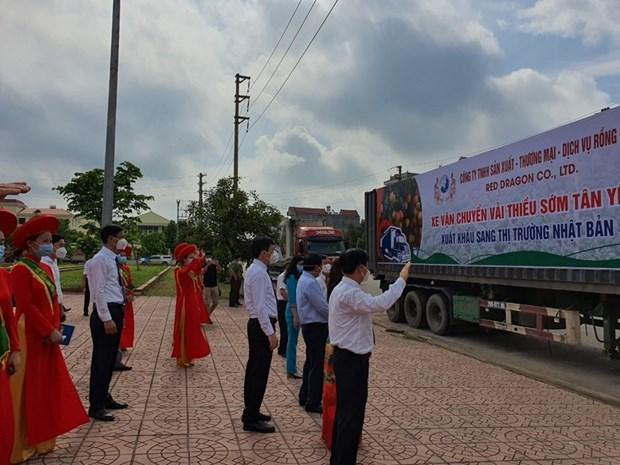 Bac Giang: De nombreuses entreprises se sont engagees a vendre des litchis du district de Tan Yen hinh anh 2
