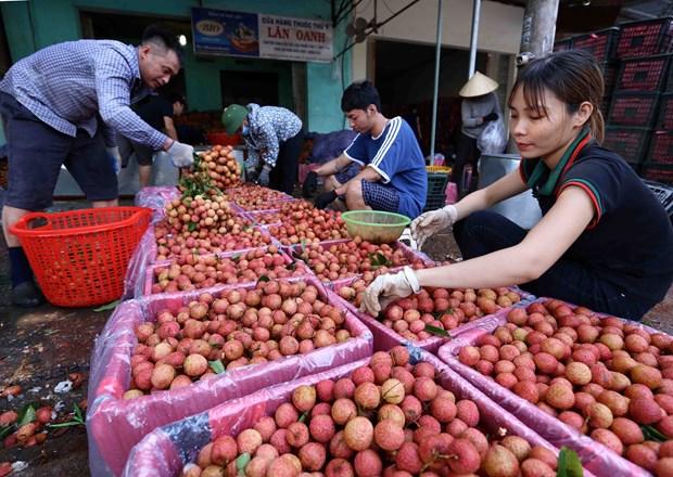 Bac Giang: De nombreuses entreprises se sont engagees a vendre des litchis du district de Tan Yen hinh anh 1