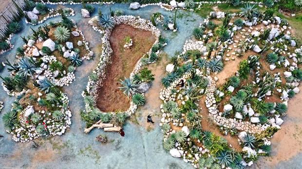 Cacti Zone, nouvelle destination pour les Hanoiens hinh anh 1