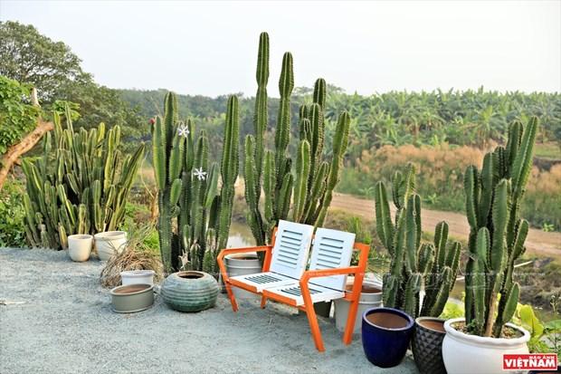 Cacti Zone, nouvelle destination pour les Hanoiens hinh anh 4