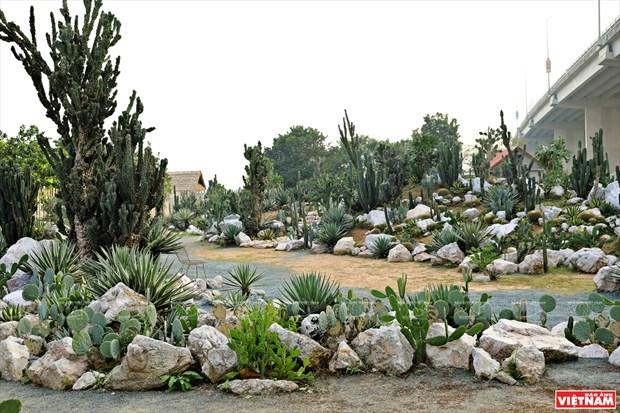 Cacti Zone, nouvelle destination pour les Hanoiens hinh anh 3