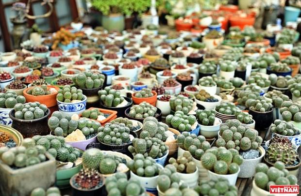 Cacti Zone, nouvelle destination pour les Hanoiens hinh anh 5
