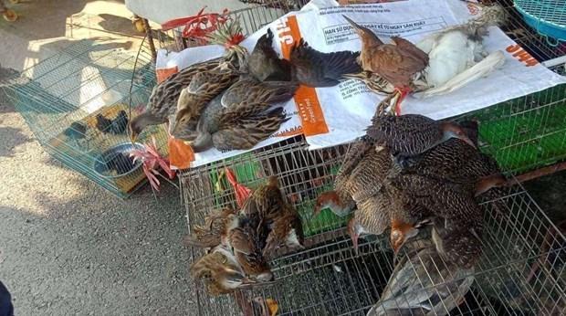 Des ONG appellent a la protection des oiseaux sauvages hinh anh 2