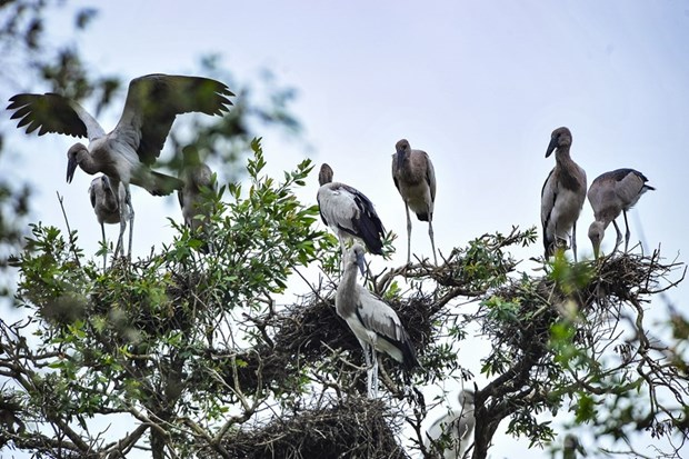Des ONG appellent a la protection des oiseaux sauvages hinh anh 1