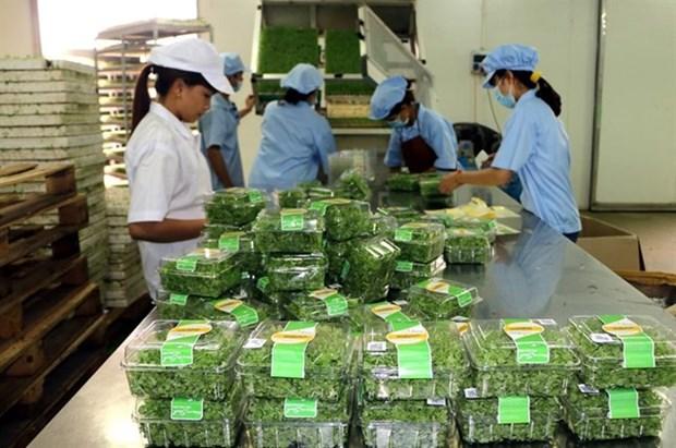 Le secteur agricole vise une croissance annuelle de 3% d'ici 2020 hinh anh 1