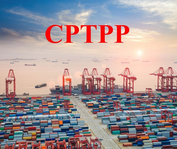 Le Vietnam et la Nouvelle-Zelande preparent l'entree en vigueur du CPTPP hinh anh 1