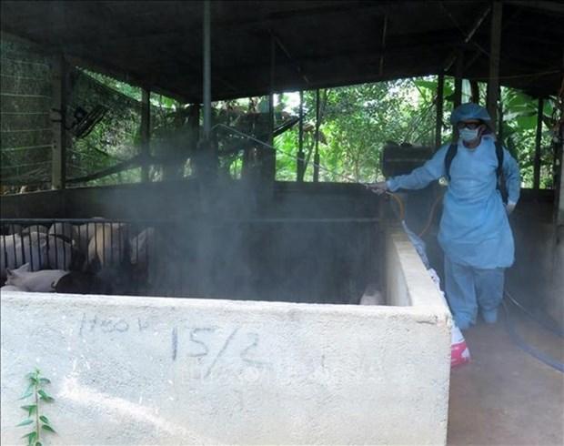 Des foyers epidemiques de peste porcine africaine decouvertes a Hung Yen et Thai Binh hinh anh 1