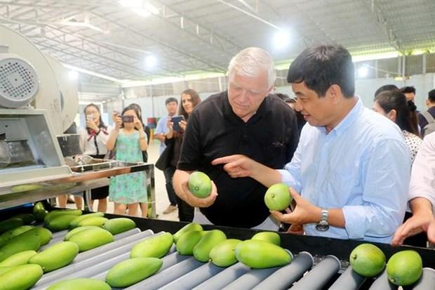 Les exportations de fruits et legumes en baisse de 9,9% sur deux mois hinh anh 1