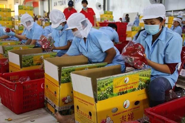 Promouvoir des chaines de production de produits agricoles destines aux exportations en Chine hinh anh 1