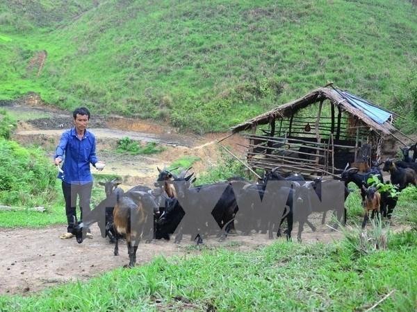 Quang Ninh accelere la reduction de la pauvrete dans les zones montagneuses hinh anh 1