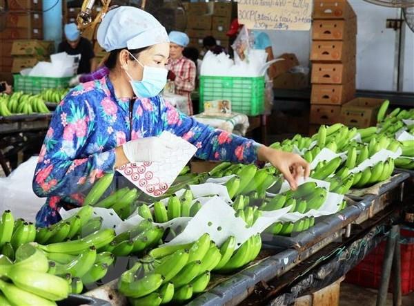 Plus de 1,6 milliard de dollars d'exportations de fruits et legumes en cinq mois hinh anh 1