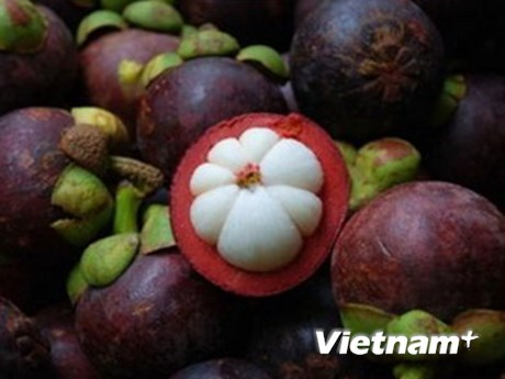Les exportations de fruits et legumes en hausse de 10,3% en cinq mois hinh anh 1
