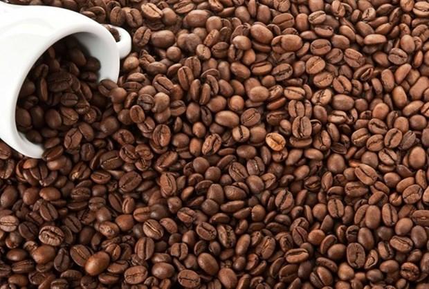 Plus de 1,3 milliard de dollars d'exportations de cafe en cinq mois hinh anh 1