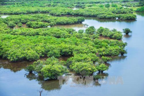 Le gouvernement publie un decret sur la preservation des zones humides hinh anh 1