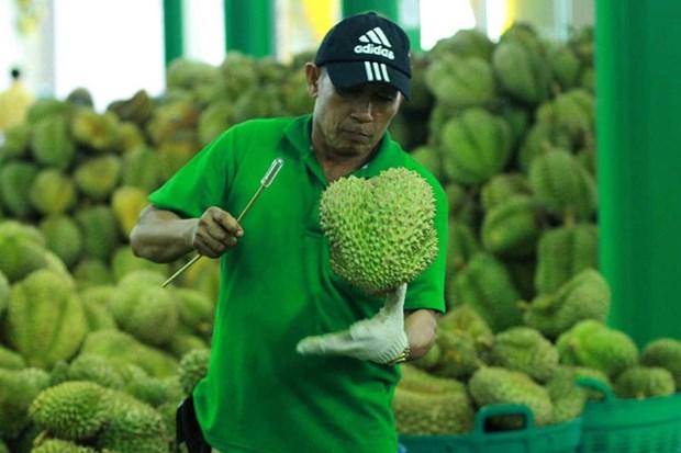 La Thailande, championne des exportations de durians hinh anh 1