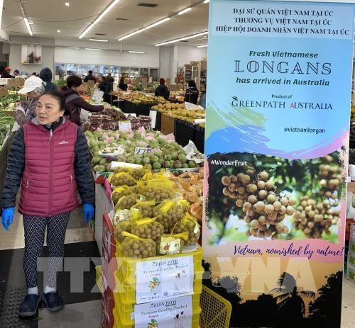 Une journee des longanes vietnamiens frais en Australie hinh anh 1