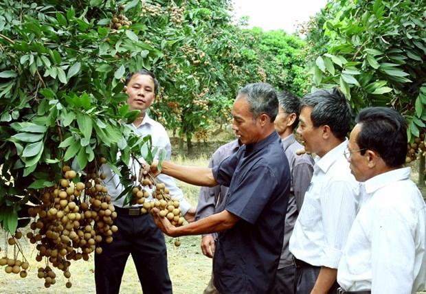 Hanoi accelere l'edification de marques protegees pour ses produits agricoles renommes hinh anh 1