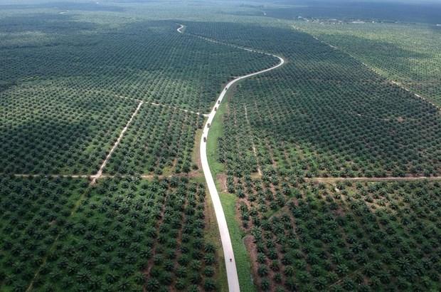 L'Indonesie va poursuivre l'UE en justice pour proteger son industrie de l'huile de palme hinh anh 1