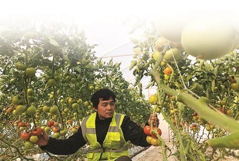 Travailler en ferme en Australie : une experience unique ! hinh anh 1
