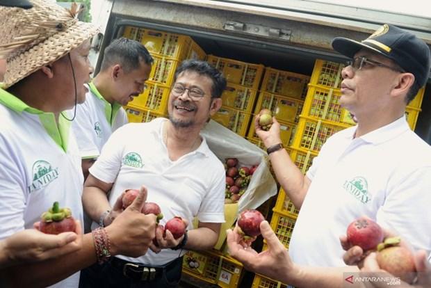 L'Indonesie accelere ses exportations de mangoustans de Bali hinh anh 1