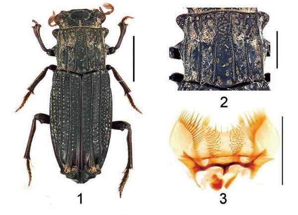 Decouverte de nouvelles especes d'insectes au Vietnam hinh anh 1