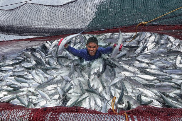Les Philippines proposent a la Banque mondiale de soutenir son projet FishCore hinh anh 1